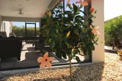 Peach Hibiscus Tree